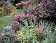 realizacje ogrodów- rabata bylinowa